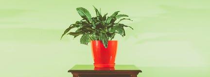 Fiore dell'interno della decorazione della casa in vaso da fiori rosso sulla superficie di legno del comodino contro la parete ve Fotografia Stock