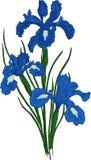 Fiore dell'iride. Vettore fotografie stock
