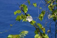 Fiore dell'oceano Fotografia Stock Libera da Diritti