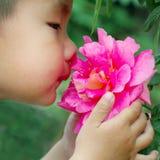 Fiore dell'odore del ragazzo fotografia stock libera da diritti