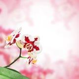 Fiore dell'orchidea immagini stock libere da diritti