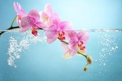 Fiore dell'orchidea in acqua Fotografia Stock