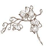 Fiore dell'orchidea del disegno della mano di vettore Fotografie Stock Libere da Diritti