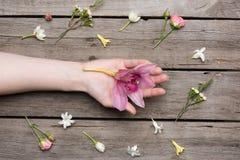 Fiore dell'orchidea della tenuta della persona e bella raccolta dei fiori sul piano d'appoggio di legno Immagini Stock Libere da Diritti
