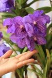 Fiore dell'orchidea di tocco della mano Immagini Stock