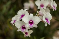 Fiore dell'orchidea e fondo delle foglie verdi Fotografia Stock