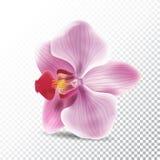 Fiore dell'orchidea isolato su fondo trasparente Illustrazione realistica di vettore del fiore di rosa dell'orchidea Immagine Stock Libera da Diritti