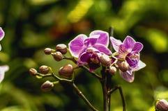 Fiore dell'orchidea nel giardino per la progettazione del concetto di bellezza e dell'idea delle cartoline di agricoltura fotografia stock