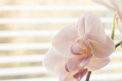 Fiore dell'orchidea vicino ad una finestra immagini stock