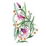 Fiore dell'ornamento del Wildflower in uno stile dell'acquerello isolato Immagini Stock