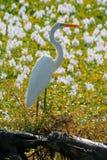 Fiore dell'uccello Fotografia Stock