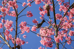 Fiore dell'uccello Fotografie Stock Libere da Diritti