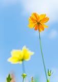 Fiore dell'universo Fotografie Stock Libere da Diritti