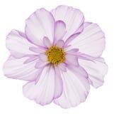 Fiore dell'universo immagini stock libere da diritti