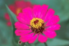 Fiore dell'universo Fotografia Stock Libera da Diritti
