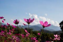 Fiore dell'universo nella sera fotografia stock libera da diritti