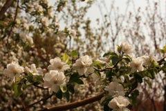 fiore della begonia fotografie stock