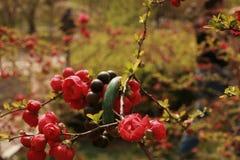 fiore della begonia fotografie stock libere da diritti