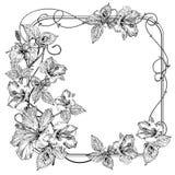Fiore della clematide Fiori eleganti d'annata Illustrazione in bianco e nero di vettore botanica Vettore Fotografia Stock