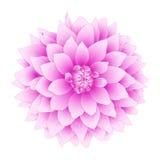 Fiore della dalia di vettore. illustrazione di stock