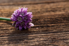 Fiore della erba cipollina Immagini Stock Libere da Diritti
