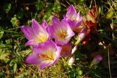 Fiore della fioritura Fotografie Stock