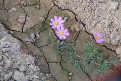 Fiore della flora Immagine Stock