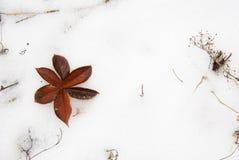 Fiore della foglia di autunno su neve Fotografie Stock Libere da Diritti