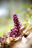 Fiore della foresta Fotografia Stock