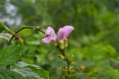 Fiore della foresta, con una formica, Immagine Stock