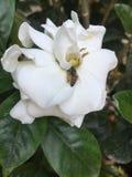 Fiore della giungla Fotografia Stock