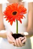 Fiore della holding della donna in sporcizia fotografia stock