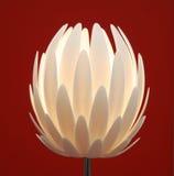 Fiore della lampada di pavimento Fotografie Stock