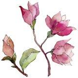Fiore della magnolia del Wildflower in uno stile dell'acquerello isolato Fotografia Stock Libera da Diritti