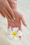 Fiore della mano Fotografia Stock