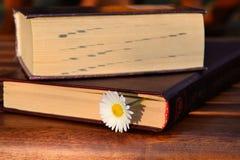 Fiore della margherita e del libro Immagine Stock