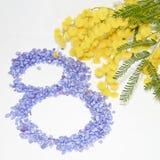 Fiore della mimosa di Giornata internazionale della donna Immagini Stock