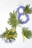 Fiore della mimosa di Giornata internazionale della donna Immagine Stock Libera da Diritti