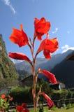Fiore della montagna Fotografie Stock Libere da Diritti