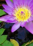 Fiore della natura Fotografia Stock