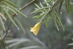 Fiore della natura fotografie stock