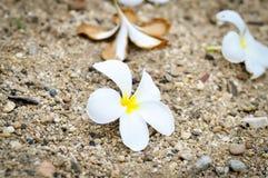 Fiore della pagoda di caduta Immagini Stock