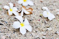 Fiore della pagoda di caduta Fotografia Stock Libera da Diritti