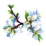 Fiore della pittura dell'acquerello Fotografie Stock Libere da Diritti
