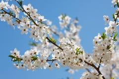 Fiore della primavera immagine stock