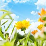 Fiore della primavera Fotografia Stock Libera da Diritti