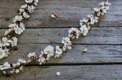 Fiore della primavera sopra fondo di legno Immagine Stock
