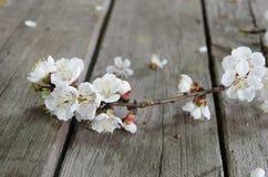 Fiore della primavera sopra fondo di legno Fotografia Stock Libera da Diritti