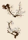 Fiore della prugna con la linea progettazione Immagine Stock