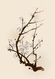 Fiore della prugna con la linea progettazione Fotografie Stock Libere da Diritti